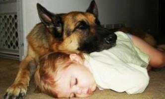 Дитяча астма: сон з твариною знижує ризик захворювання