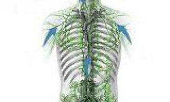 Функції лімфатичної системи людини