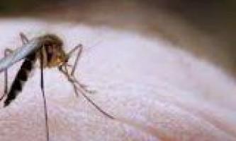 Як захистити шкіру дитини від укусу комарів
