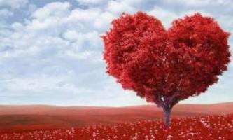 Нове серце зі стовбурових клітин? Незабаром це стане можливим