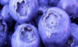 Користь і протипоказання ягід і листя чорниці для здоров`я людини