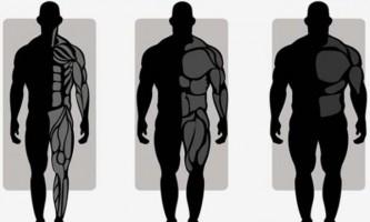 Порівняння чоловічих типів статури: ектоморф, мезоморф і ендоморф