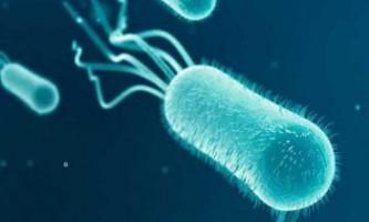 """Вчені відкрили """"супербактерій"""", стійку до будь-яких антибіотиків"""